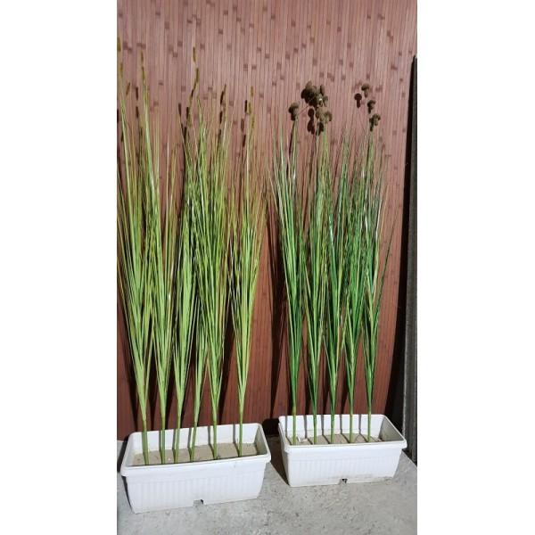 Декоративна трева 5A с гъбки и косми