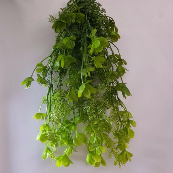 Растение HK-007