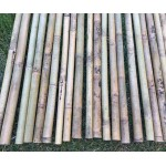 Бамбук ф3-4см