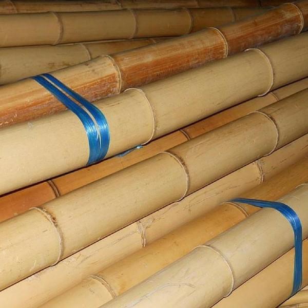 Бамбук ф12-14см