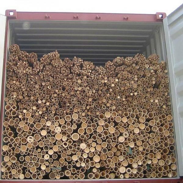 Бамбукови пръти 6м от 10 до 45лв/бр.