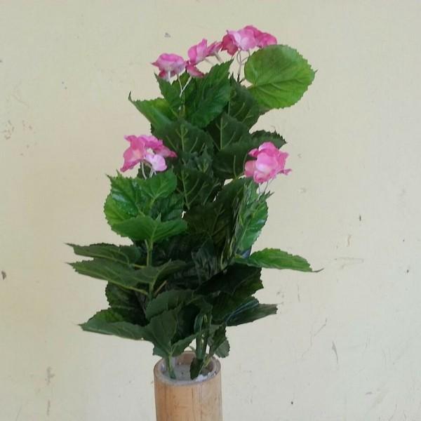Хортензия с розов цвят