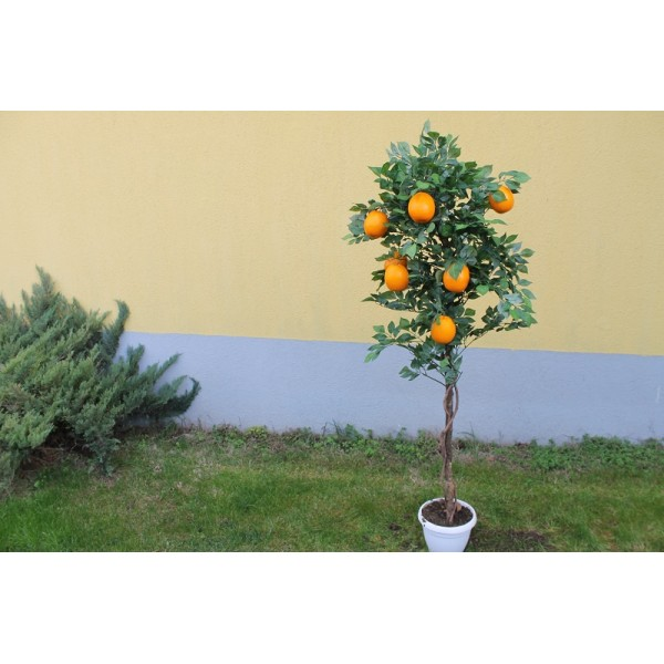 Портокалово дръвче