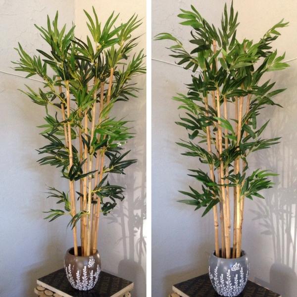 Бамбук в саксия 0004