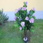 Хортензия лилава- храст