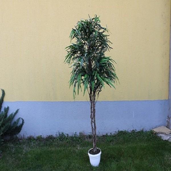 Евкалиптово дърво
