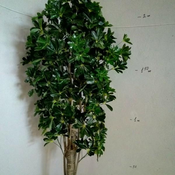 Дърво на Късмета 220см