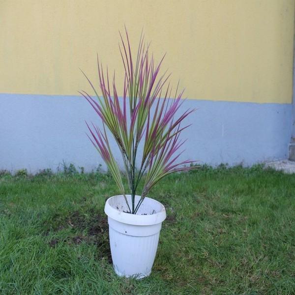 Драцена с лилави листа