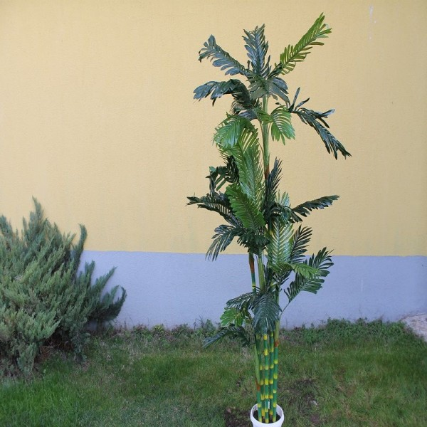 Фениксова палма