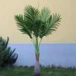 Хавайска палма