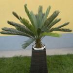 Изкуствена палма Цикас