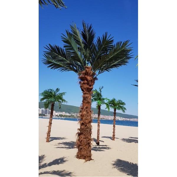 Декоративна палма 15 листа