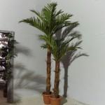 К-т Кокосови палми  N1