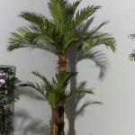 К-т Кокосови палми N2