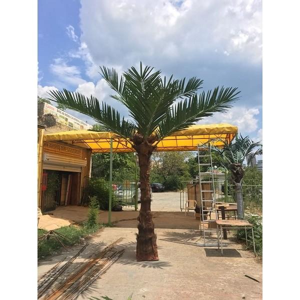 Декоративна палма