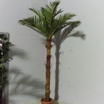 Кокосова палма с 10 листа