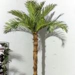 Кокосова палма с 15 листа