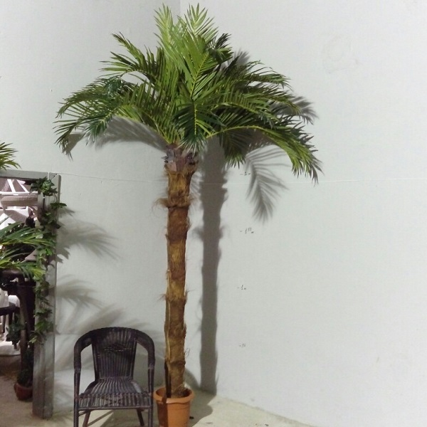 Кокосова палма с 20 листа