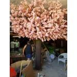 Голямо розово дърво 4м височина