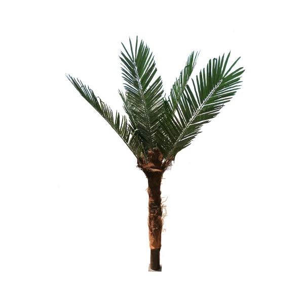 Декоративна палма с 7 листа