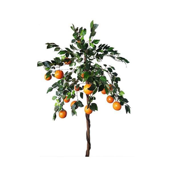 Портокалово дърво 2